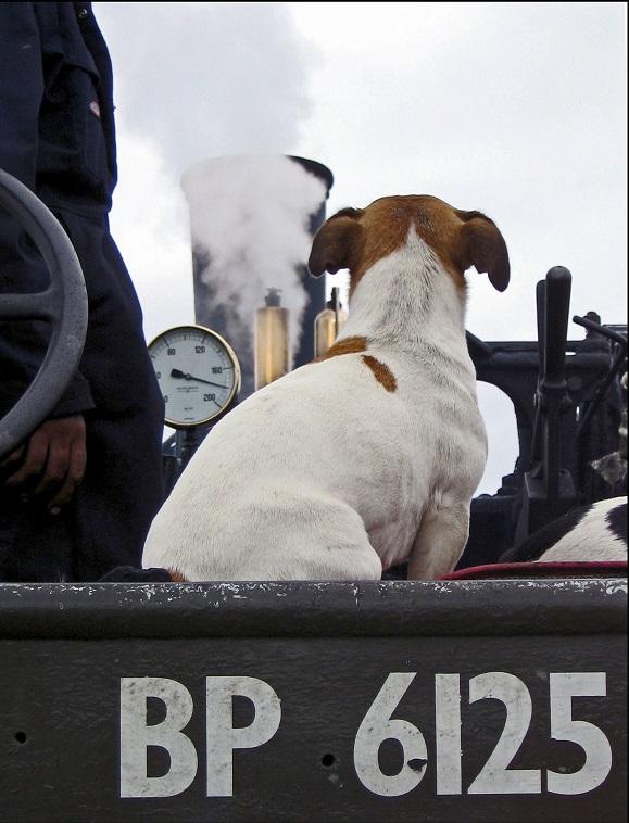 Jack Russel Engine Driver